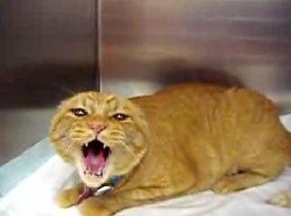 Possessed_demon_cat