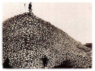 Buffalo-skulls